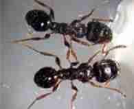 Ant control near me