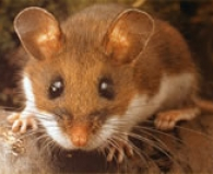 Rodent Control Programs