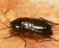 Roaches Treatment Programs