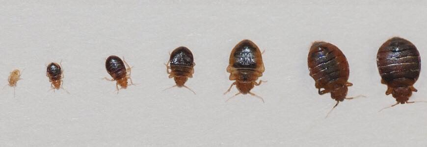 Bed bug control Middlesex NJ